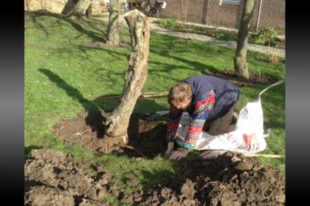 Dode Bomen Uitgegraven